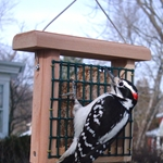 Single Suet Feeder